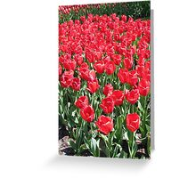 Red Army - Keukenhof Tulips Greeting Card