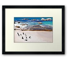 African Penguins, Boulders Beach, Simons Town, South Africa Framed Print