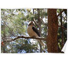 Kookaburra - Mt Warning Road Poster