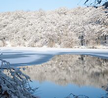 Winter Reflections by Squawk