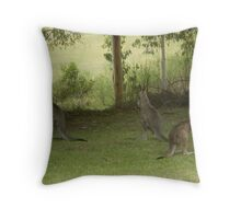 Feeding Kangaroos at Yarongabilly Caves Throw Pillow