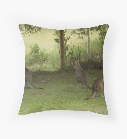 Feeding Kangaroos at Yarongabilly Caves Throw Pillow