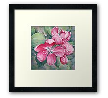 Flower of Crab-apple Framed Print