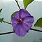 11th of January - Purple Flowers