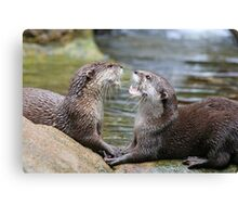 hungry otters Canvas Print