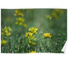 Abstract Nature - Grass Weeds Poster