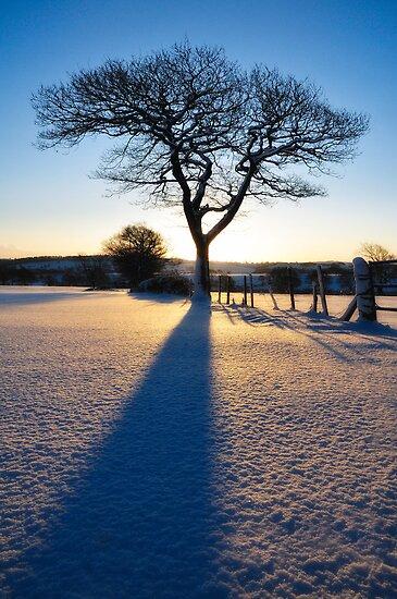 Winter Ash 2 by Chris Charlesworth
