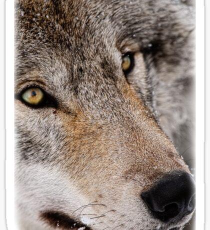 Wolf Shirt - 7 Sticker