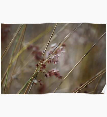 Abstract Nature - Grass Poster