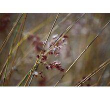 Abstract Nature - Grass Photographic Print