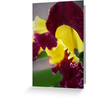 Orchid strikes Greeting Card