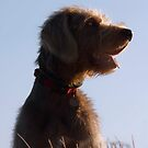 Posers profile by SWEEPER