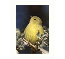Chubby Warbler (Orange-crowned) Art Print