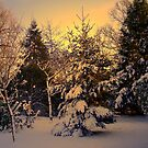 Snow Covered Trees  by Kate Towers IPA