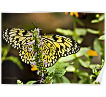 Easter Tiger Swallowtail  Poster