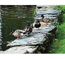 Ducks by Pond Photographic Print