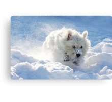 Westie in the snow Canvas Print