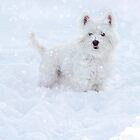 Snowfall westie by Gemma  Simpson