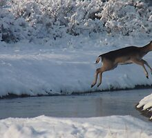 Jumping Fallow deer in the snow 1 by DutchLumix