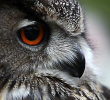 The Owl with Orange Eyes by Di Mackey
