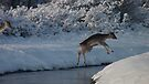 Jumping Fallow deer in the snow 5 by DutchLumix
