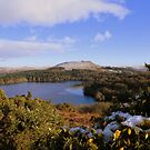 Dartmoor: Looking Over Burrator Reservoir by Rob Parsons
