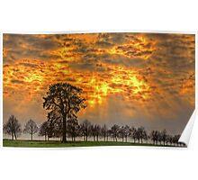 Bäume im Licht Poster