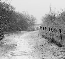 Steady Path by MuhammadAtif
