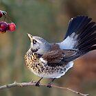 A Birdie's Tail... by Krys Bailey