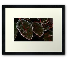 Blueberry Tree with Frost Framed Print