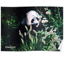 Panda Amongst the Daisies Poster