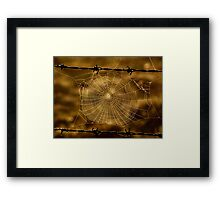 Cobweb and Barbed Wire Framed Print