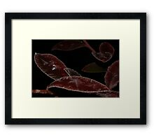 Frost on Blueberry Tree  Framed Print