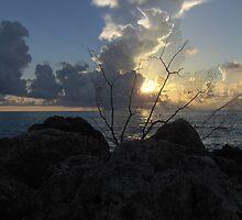 Miami Beach Sunrise 2 by Alejandro Cuadra
