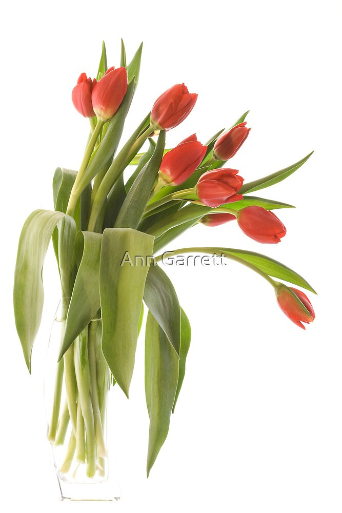 Red Tulips by Ann Garrett
