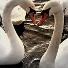 Swan Love by KChisnall