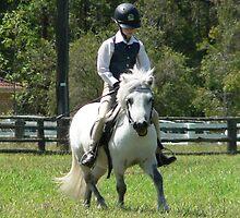 Ridden Shetland Pony Stallion - Nabiac Show by louisegreen