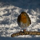 Robin Redbreast by Chris Clark
