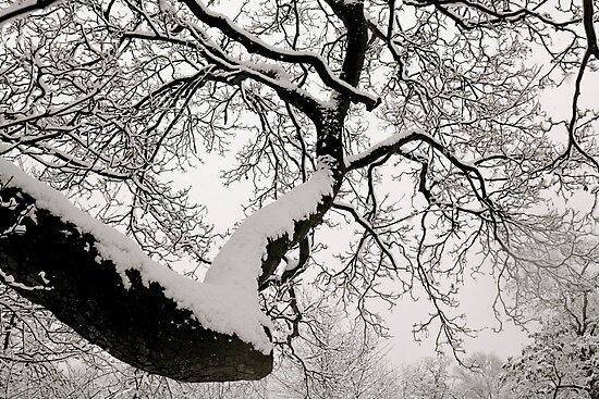 Snowy branches by Richard Pitman