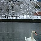 Swanning Around by Lisa Williams