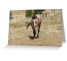 OK. OK! I'm coming, Muggles the Peoples horse. Truro, S.A. Greeting Card