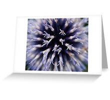 Blue globe thistle Greeting Card