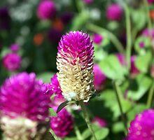 Caribbean Flower by Johnny Furlotte