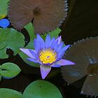 Water lily-Downtown Brisbane by Jason Kiely