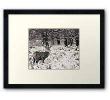 Winter Stag Framed Print