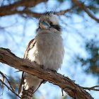 Kookaburra Sits in the Old Tea Tree... by Puggs