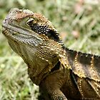Eastern Water Dragon enjoying the feast after lawn mowing by John Hansen