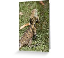 Eastern Water Dragon enjoying the feast after lawn mowing Greeting Card