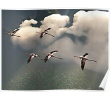 Flamingos of the Cloud Forests Poster