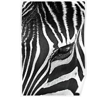 That Zebras Looking at Me Poster